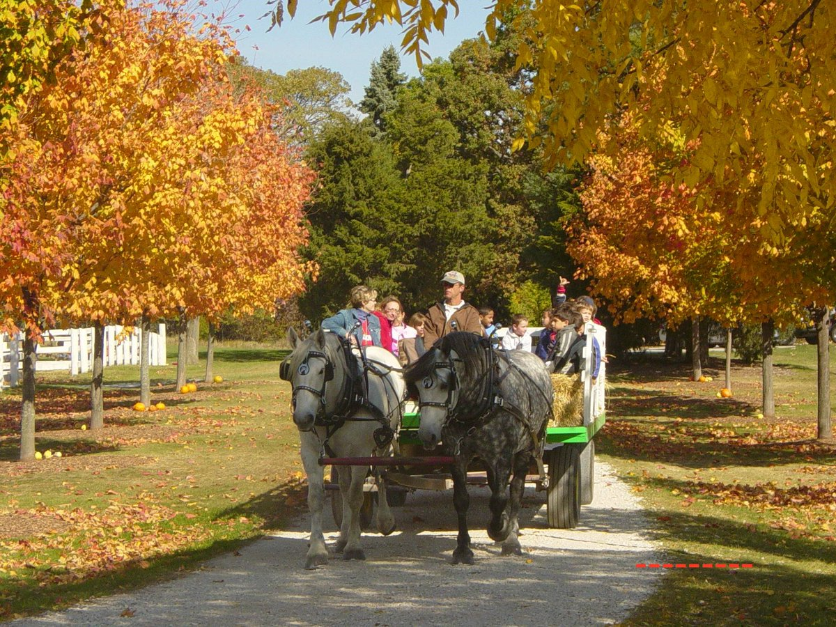 Image result for horsedrawn hayrides