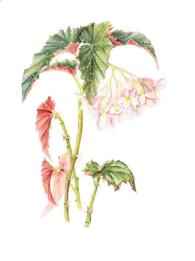 This is the last weekend to visit the RBGE Diploma Show Exhibition which is currently on @TheBotanics A stunning collection of work from the RBGE Diplomas in Botanical Illustration and Herbology, this free exhibition is not to be missed!    https:// goo.gl/kuJ2vU  &nbsp;  <br>http://pic.twitter.com/FLH1bRl0Fd