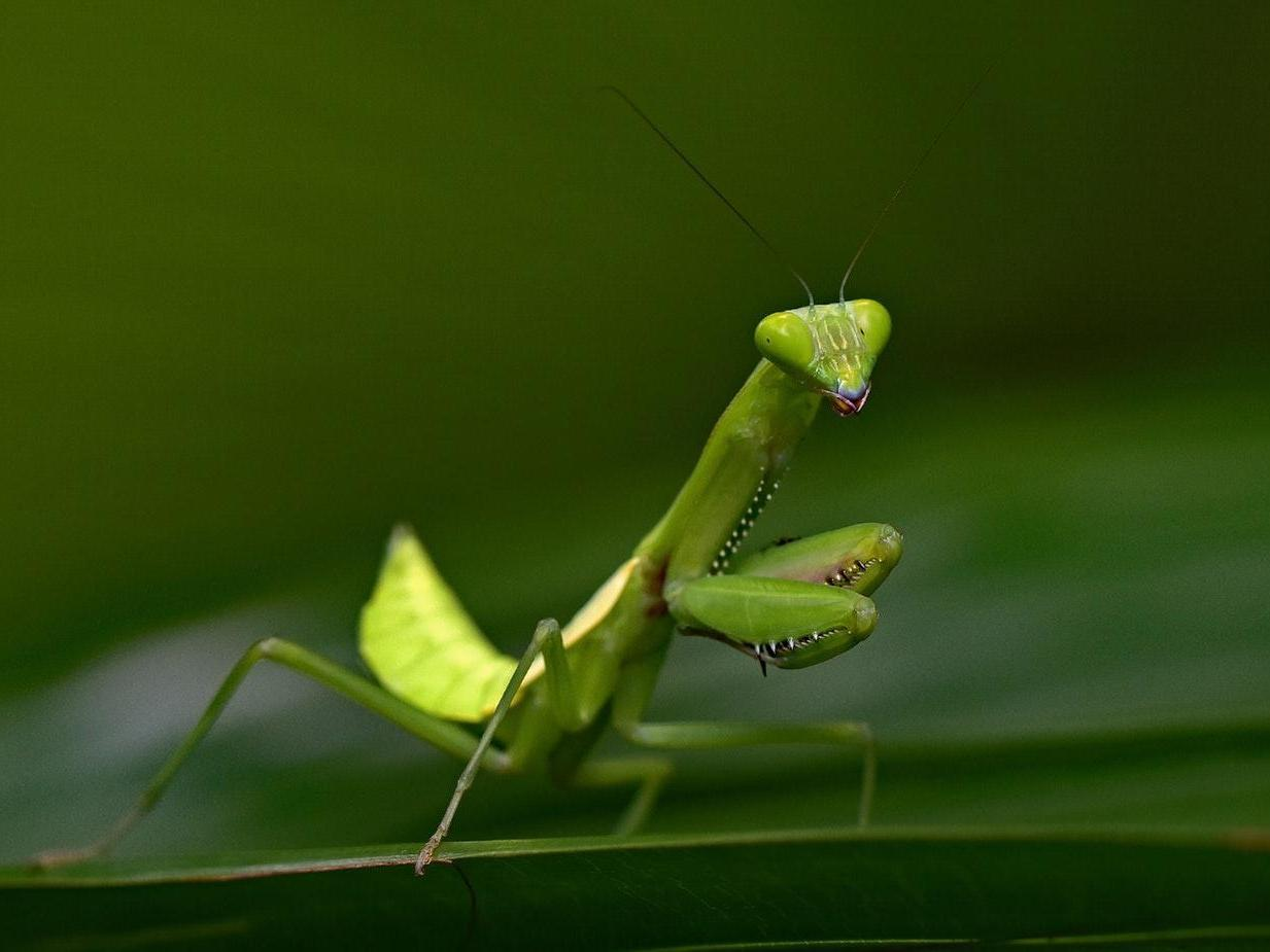 Praying mantis seen hunting for fish in wild for first time ever https://t.co/QzAewTjYqR https://t.co/xEb2JriFWi