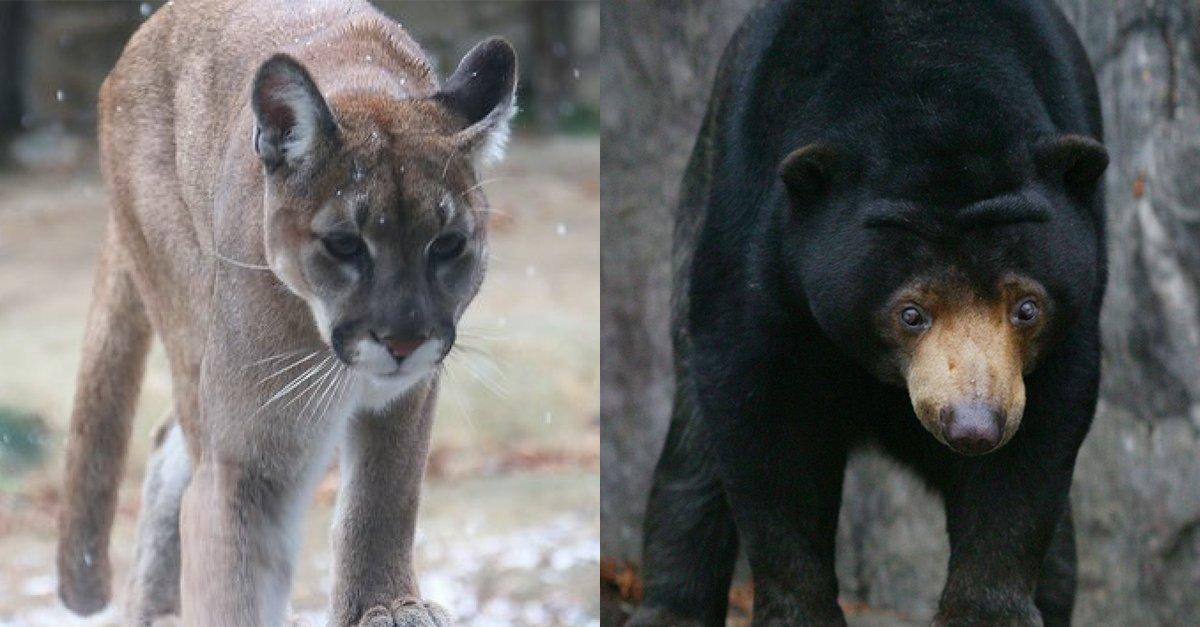 얼마나 많은 동물이 '대한민국 동물원'을 벗어나려 했나  이 비극은 뽀롱이가 처음이 아니었다.. 😭  https://t.co/B1MYxneAlj
