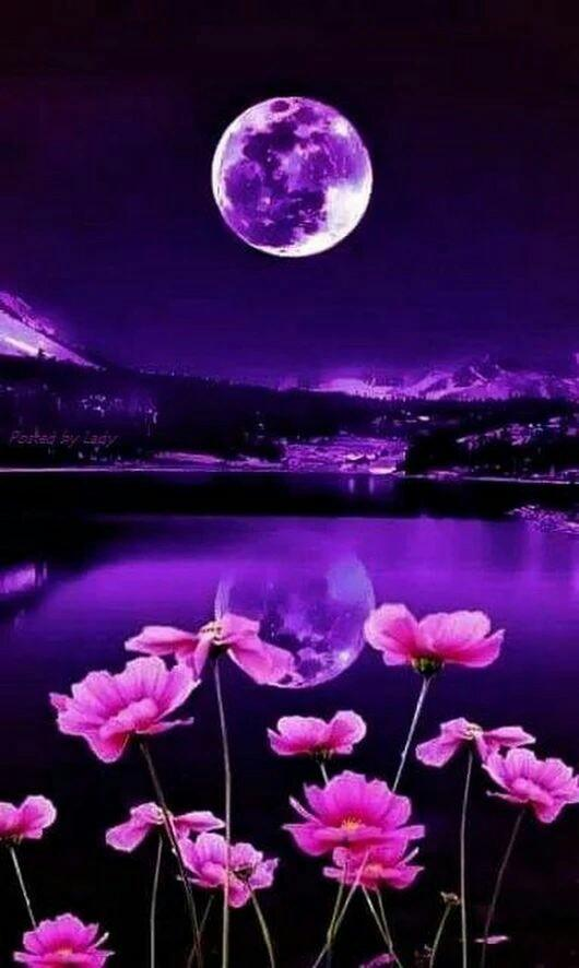 I Love Beauty Nature Ilbeautynature Twitter