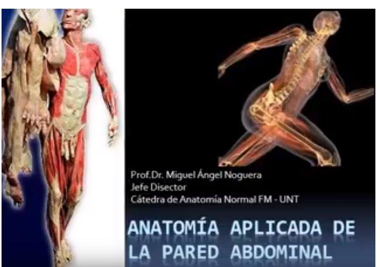 Cat. Anatomia Normal (@andresvesalio)   Twitter