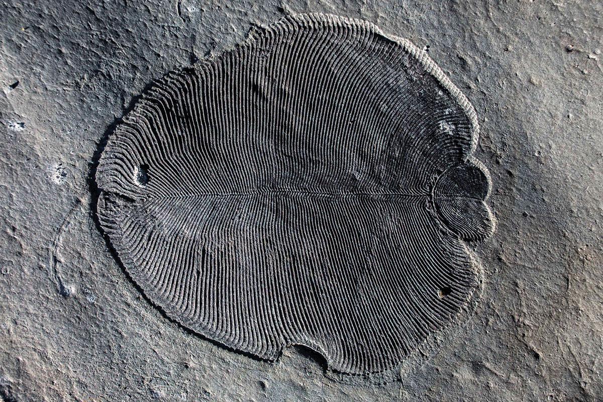 Earliest known animal was a half-billion-year-old underwater blob https://t.co/zGwbssHSYc