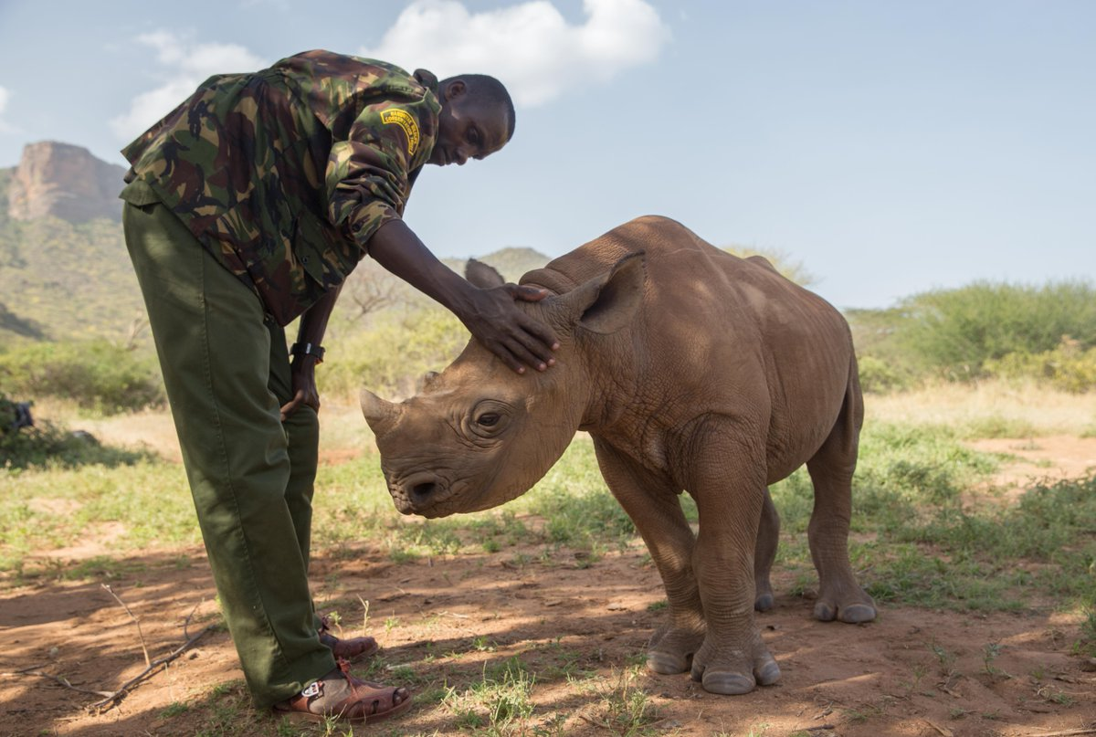 ❤️ 🦏? We do! In fact, USAID has has helped reduce rhino poaching & supports the Sera Conservancy, the first conservancy in East Africa to host a community-owned  san#rhinoctuary.     #RhinoDay#USAIDTransforms@USAIDKenya@USAIDEastAfrica@USAIDAfrica