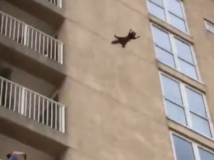 Daredevil raccoon leaps from seventh storey tower block in front of shocked onlookers https://t.co/TYHSpZmrRG https://t.co/Acmq0Y5K6R