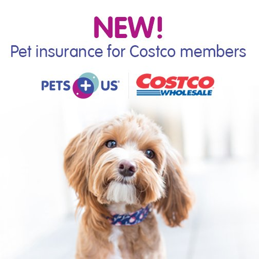 Costco Pet Insurance Pet S Gallery