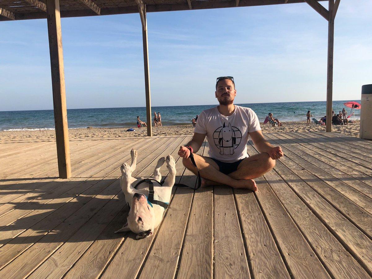 Bull Terrier Yoga  . . . . @dogsoftwitt3r #dogsoftwitter #dog #dogyoga #yogadog #tarragona #puppers #bullterrier #yoga #doggo #traveldog #dogtravel<br>http://pic.twitter.com/SYFPCNC5a5
