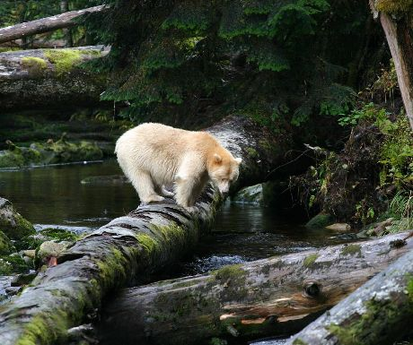 The 4 bears of Canada and how best to see them https://t.co/gzWWcXvOjh