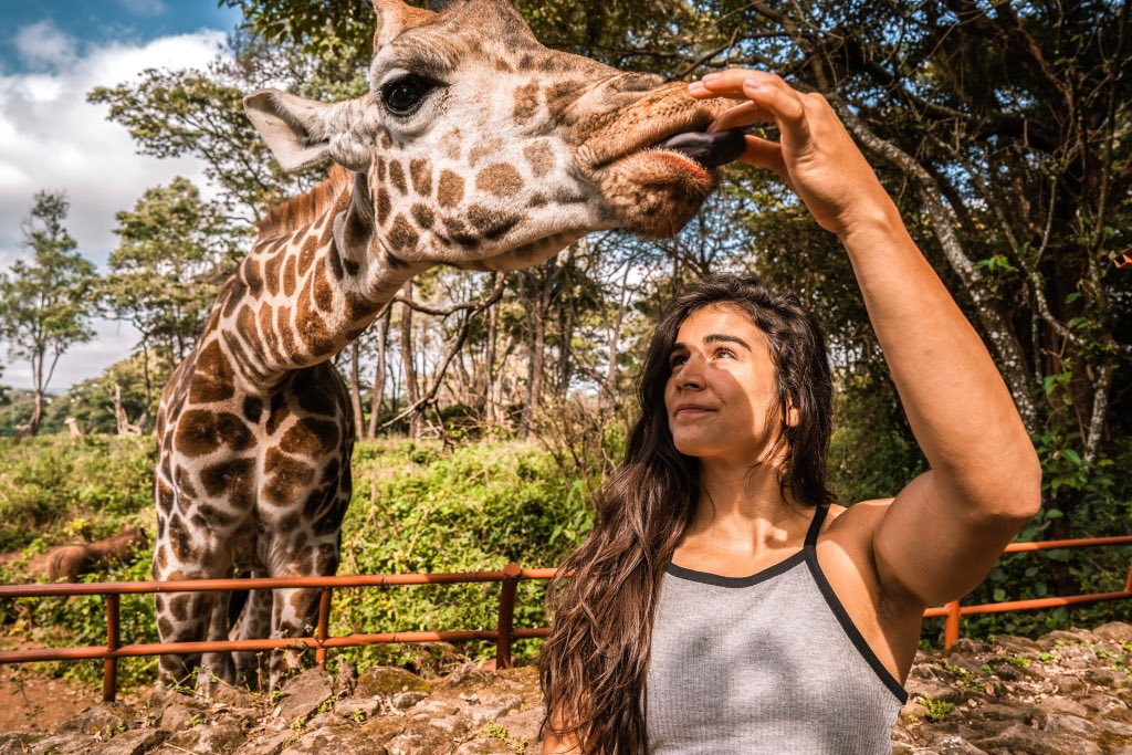 Moments like this is why I will miss you Africa... Meet Daisy 🌼 an endangered Rothschild 🦒 There are only 2000 Rothschild's 🦒 remaining & this Centre is dedicated to breeding and re-introducing them back into the wild. Such a unique experience getting up close and personal.😍