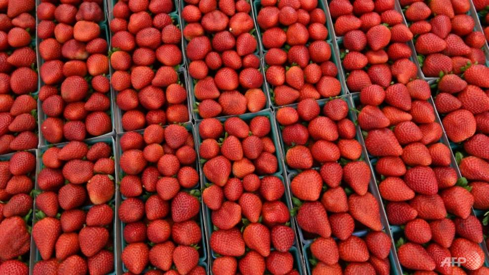 Needles found in strawberries at New Zealand's Countdown supermarket: Report https://t.co/nZ3w4B3L6X