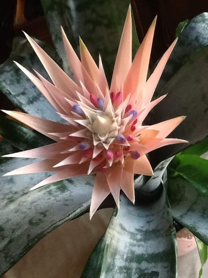 @FlowerSree @GEdelDrake @encarnacion67 @gamila2103 @justbeyou432 @FlowerchildRT