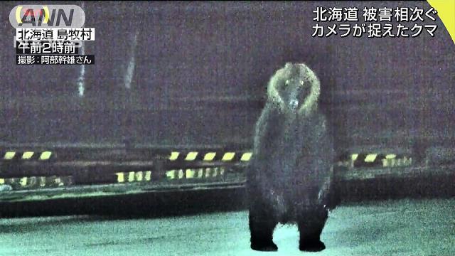 【徘徊】カメラが捉えた漁港をゆっくりと歩くクマの姿 https://t.co/OEk94U5hXN  北海道島牧村の千走漁港では、今週に入って漁船のホッケやタラが食べられる被害があったという。