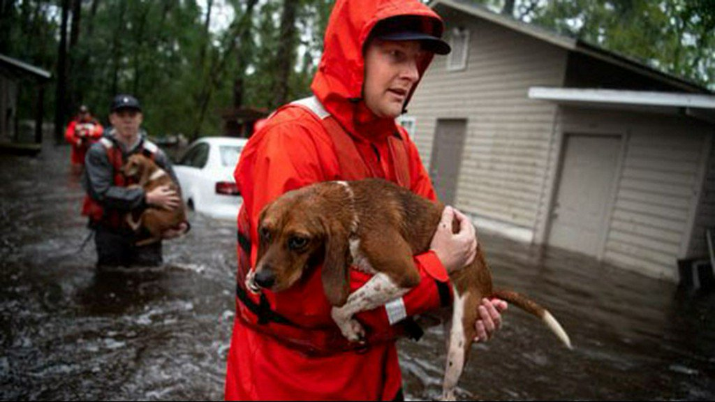 Saving pets without a permit: Good Samaritan arrested after helping animals survive Florence https://t.co/FJbzDUvaDc