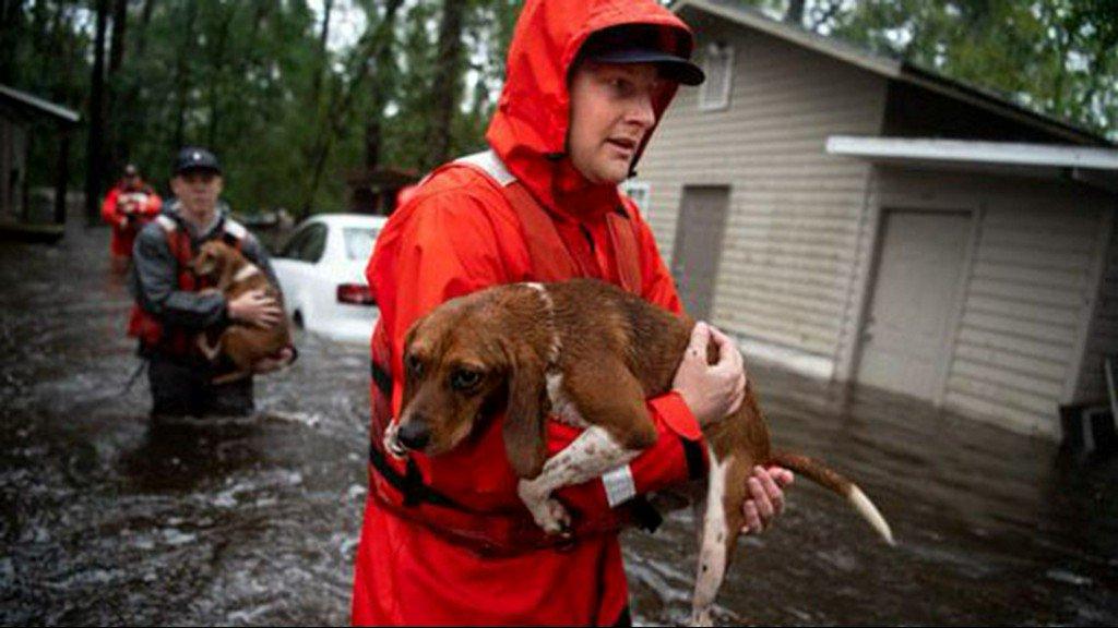 Saving pets without a permit: Good Samaritan arrested after helping animals survive Florence https://t.co/zIAIIdAjh0