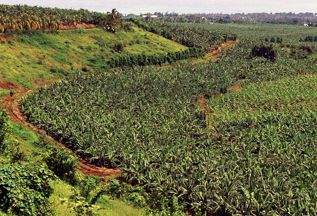 """Jusqu'en 1993, l'insecticide """"Chlordécone"""" était utilisé aux Antilles françaises.  25 ans après, 95% des Guadeloupéen·ne·s et 92% des Martiniquais·es sont contaminé·e·s, selon une étude de Santé publique France. Car oui, le chlordécone est un poison. ☠"""