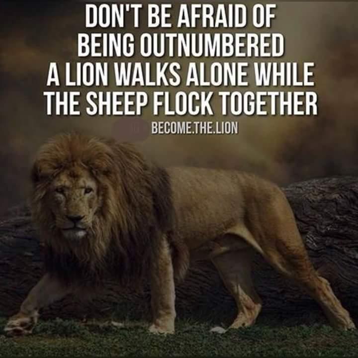 Lion Among Sheep Quotes
