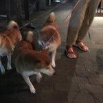犬の散歩してたら前方に「カップル痴話喧嘩からの彼女が道に座り込み」案件が発生しており(うわーこれ絶対犬が無視して通れないやつ…)と思ってたら案の定犬が1匹、2匹…と「どうしたどうした!」と彼女を囲んでしまい、ドラマチックなテンションに水をさされた彼女は仕方なく立ち上がって歩き出した