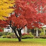 How to Landscape for Fall https://t.co/vWpIOOiRtH