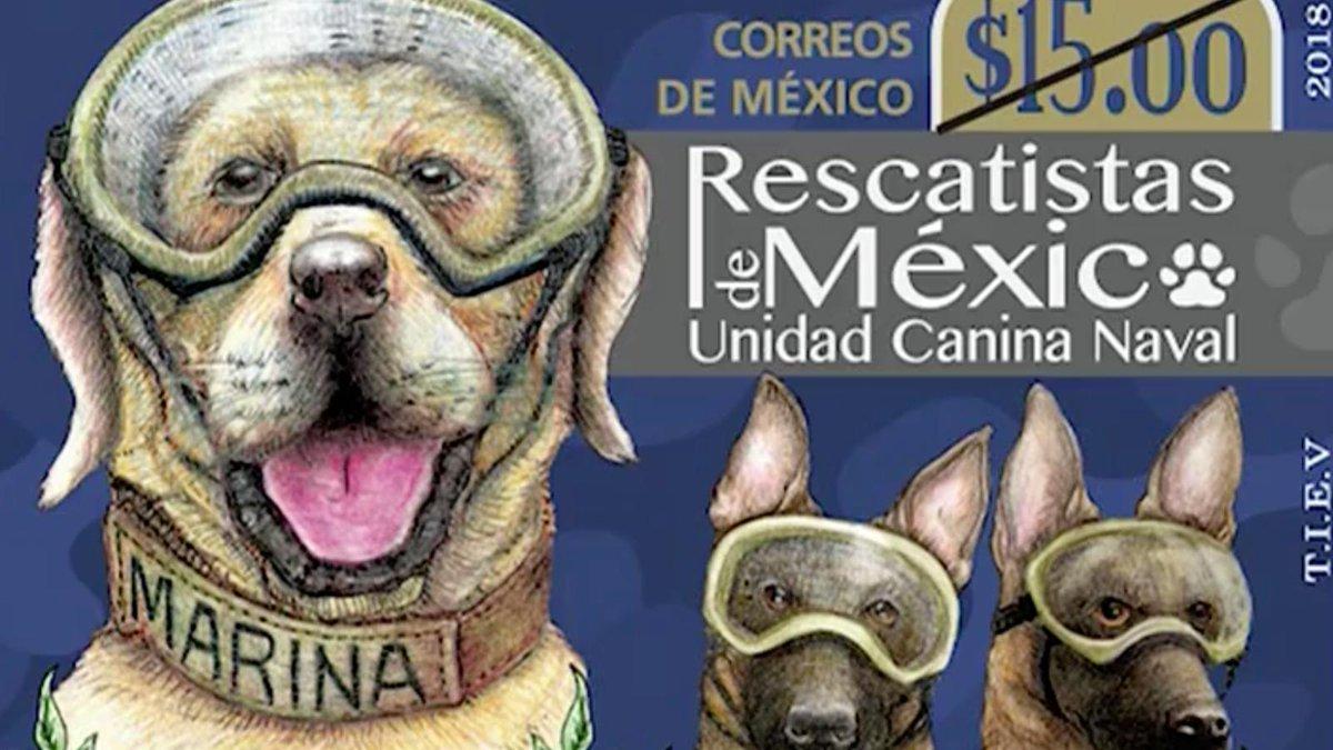 México rinde homenaje con una estampilla a los perros adiestrados que salvaron vidas en el terremoto https://t.co/5Y2gGlFpdg