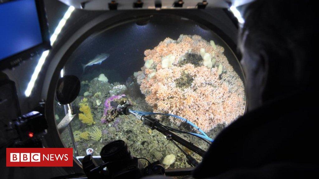 #ArquivoBBC Poluição do ar acidifica oceanos e ameaça vida marinha, diz estudo https://t.co/05cWYwk6vP