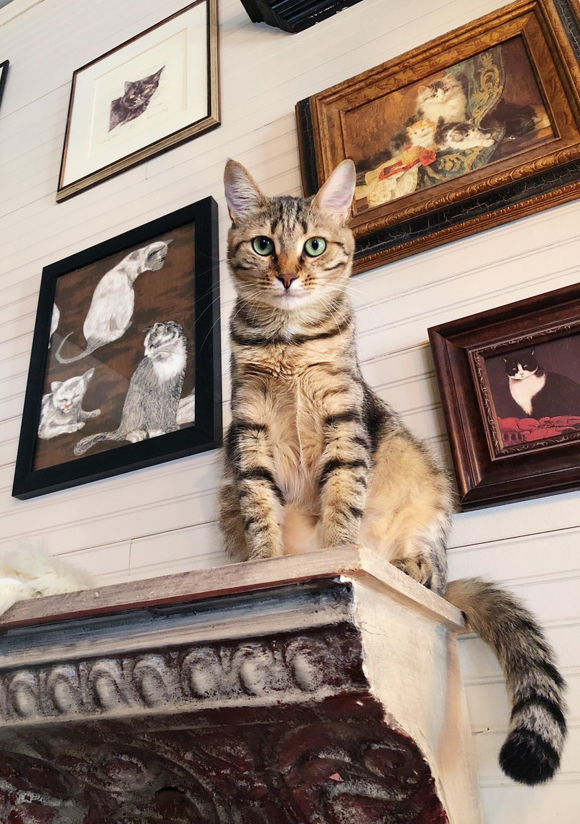Meow Moe On Twitter Https T Co Qpj7y0l7bt I Went To The Local Cat Cafe Today And Met This Beautiful Angel Cats Cat Kittens Kitten Kitty Pets Pet Meow Moe Cutecats Cutecat Cutekittens Cutekitten Meowmoe