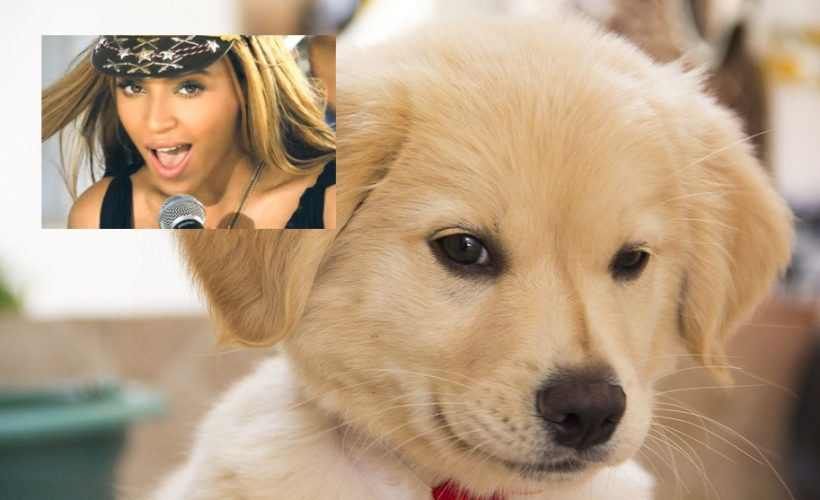 Scientists Discover 4 More Verses To 'Love On Top' That Only Dogs Can Hear: reductr.es/2z7K2Pn