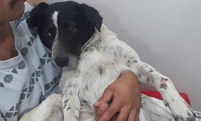 Campanha para cirurgia de cadela atropelada na Rocinha ganha camisa autografada por jogadores do Flamengo. https://t.co/4JwKbq0e1A