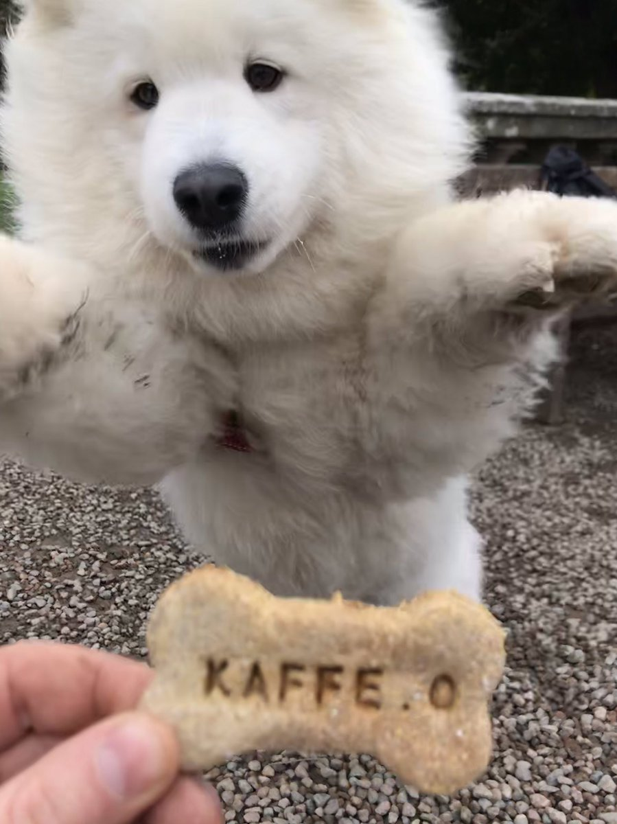Zola knows where the best treats are at @kaffeobelfast