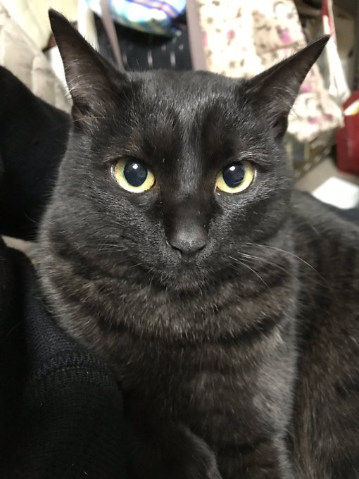 黒猫はインスタ映えしないという説があるらしいけど黒猫さんの可愛さを見て!「日本では本来黒猫は商売繁盛の幸運を呼ぶとして大事にされてきた」