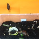 Image for the Tweet beginning: Columba's snails have a palatial
