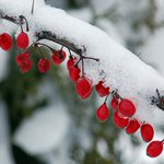 Image for the Tweet beginning: 5 Winter Gardening Tips Protect your