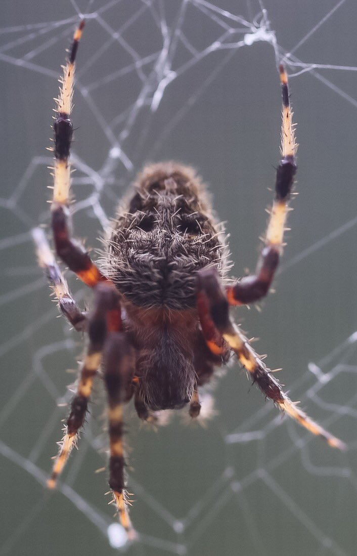C J Alderson S Tweet Name That Spider Just In Time For Season This Guy Spun His Web Right My Window Reply With Your Answers
