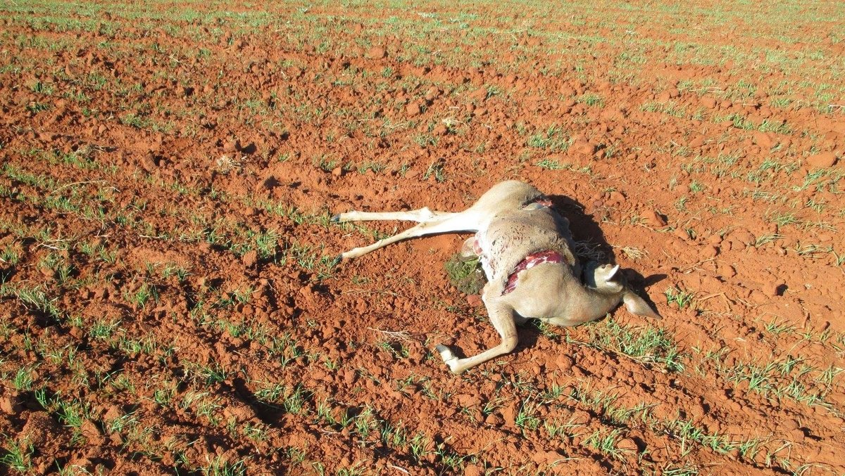 Oklahoma game wardens search for poacher who killed doe near Elk City https://t.co/IJjDT1GQWh