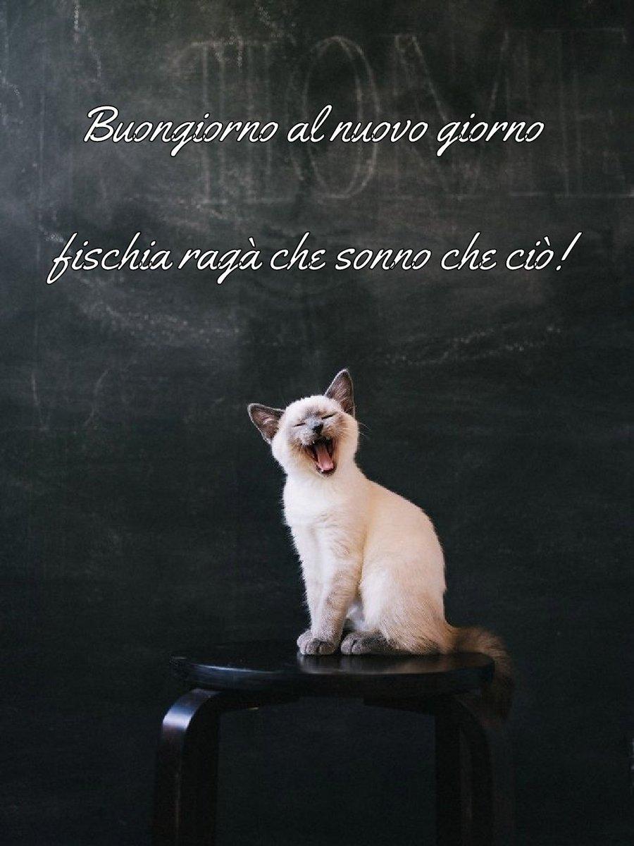 Giuliana Golinelli On Twitter Pignattilele Paolettapaly