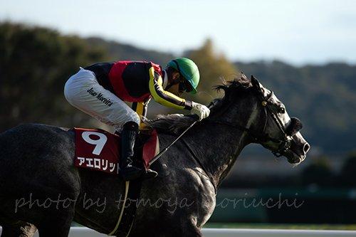 tomoya moriuchi on twitter aerolithe with jockey joao moreira won