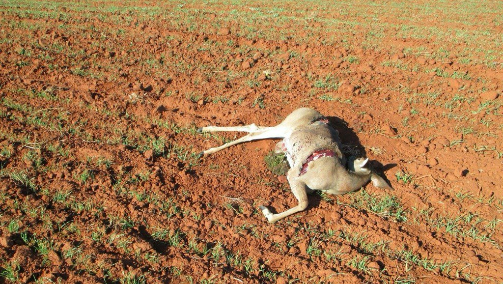Oklahoma game wardens search for poacher who killed doe near Elk City https://t.co/3mOHba7Q27