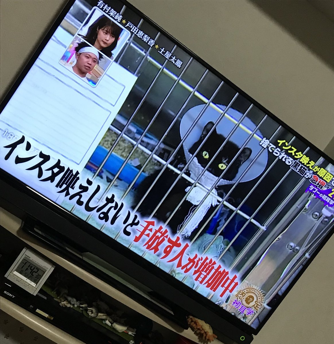 【黒猫画像】黒猫がインスタ映えしないと手放される案件。実はイギリスのことでした。【10月27日】
