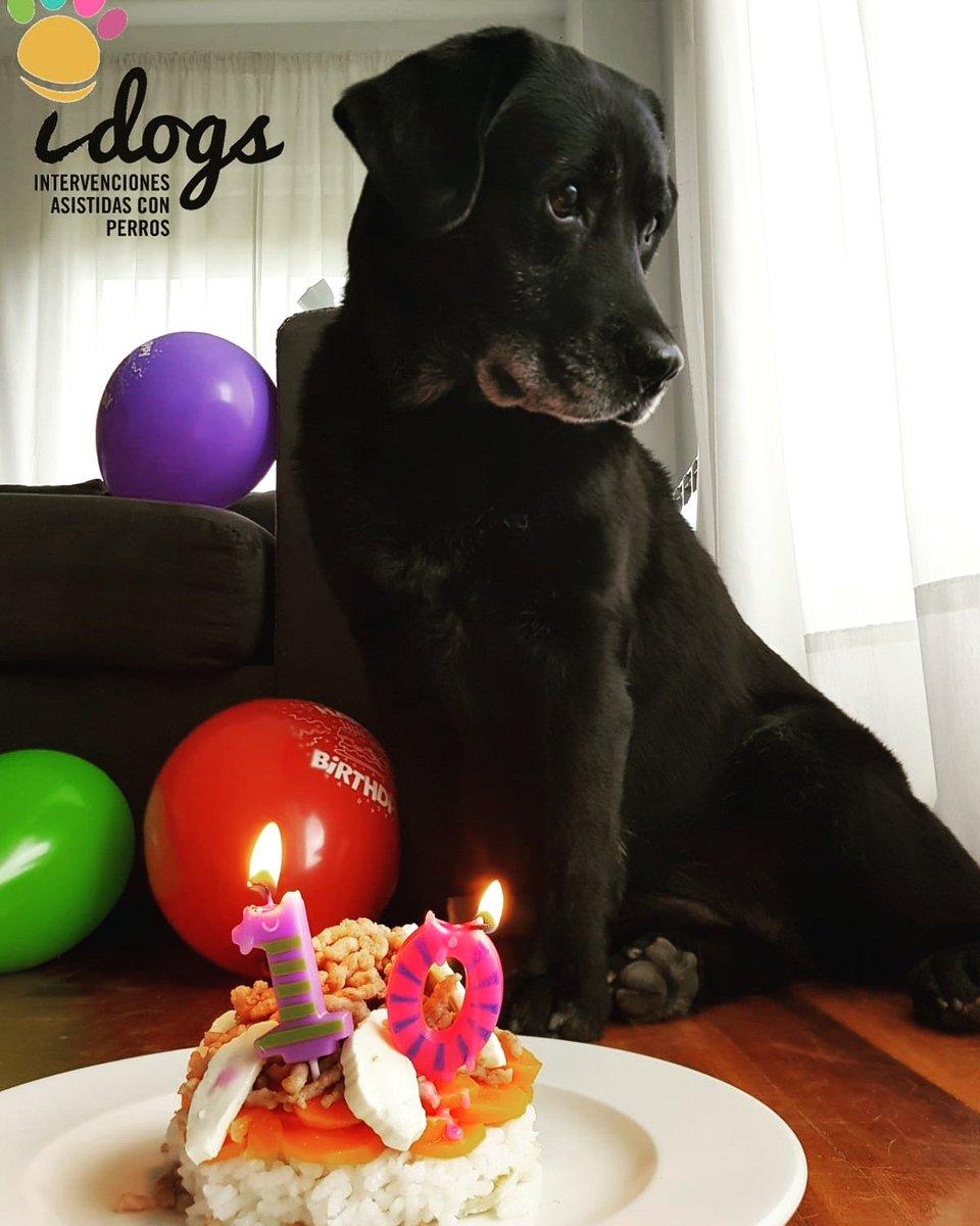 Felicidades preciosa. Gracias por tanto 😍. Te queremos 💝 #Naroa #Felicidades #FelizCumpleaños #TeQueremos #NadieComoTu #labs #labrador #blacklab #enjoy #dogs #bestlab #enjoy_life_with_dogs #word_of_lab #perros