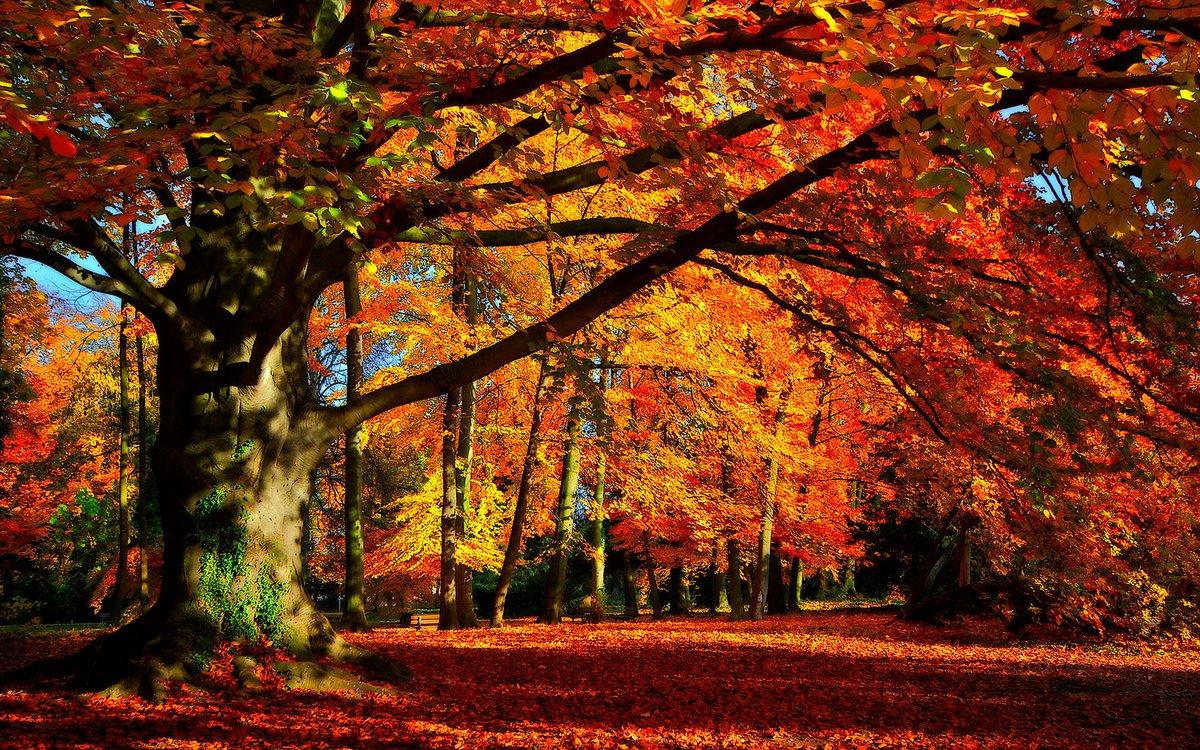 the last leaf theme