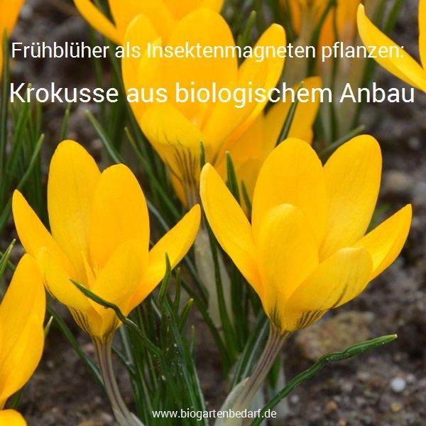 Biogartenbedarf On Twitter Jetzt Fruhbluher Als Insektenmagneten