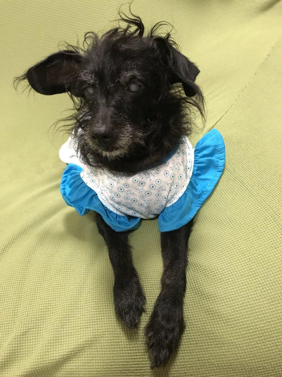 test ツイッターメディア - ばあちゃんのネグリジェっぽい犬服  #ダイソー https://t.co/Rijf0lobJh