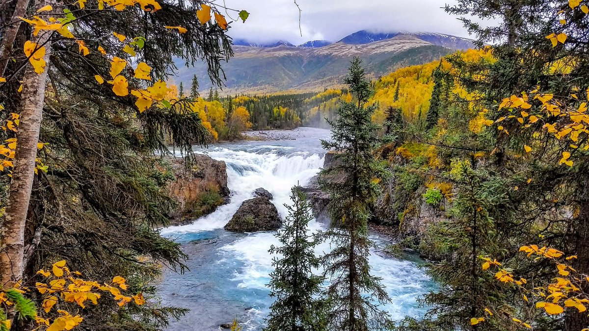 Say yellow to beautiful #fall colors on public lands: https://t.co/nGztYmuyKt 🍂 #FirstDayofFall