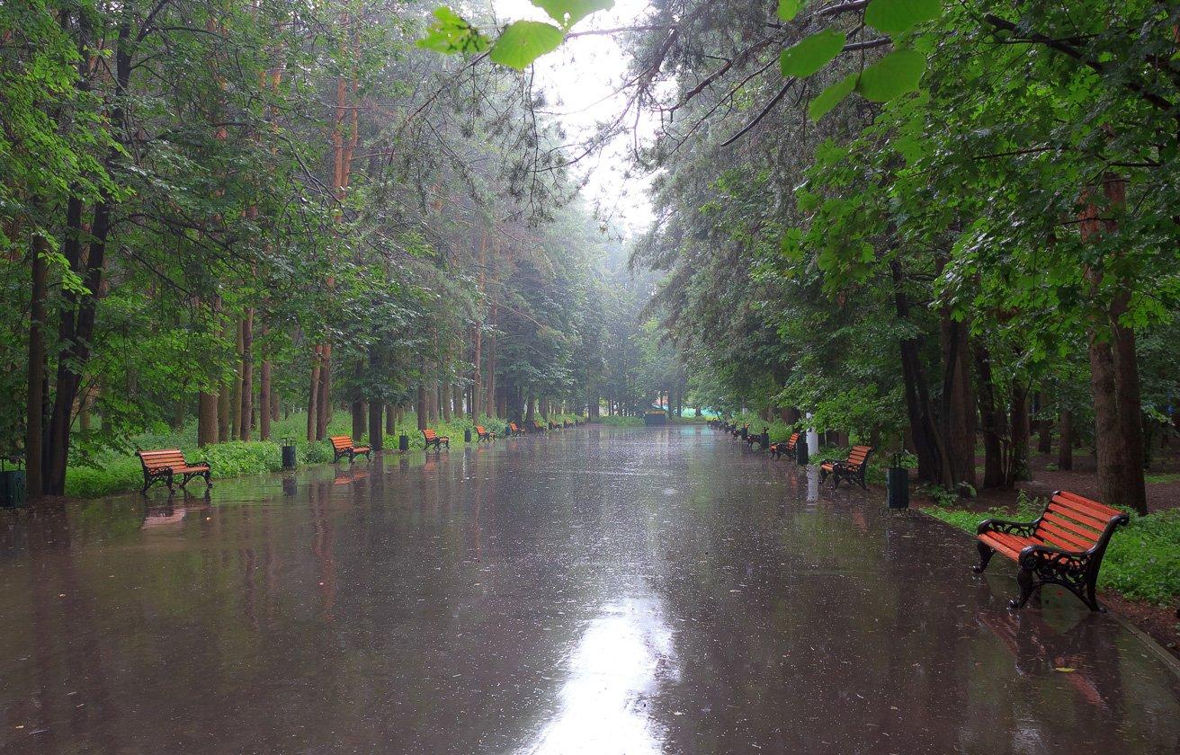 картинка дождя в парке любит деньги