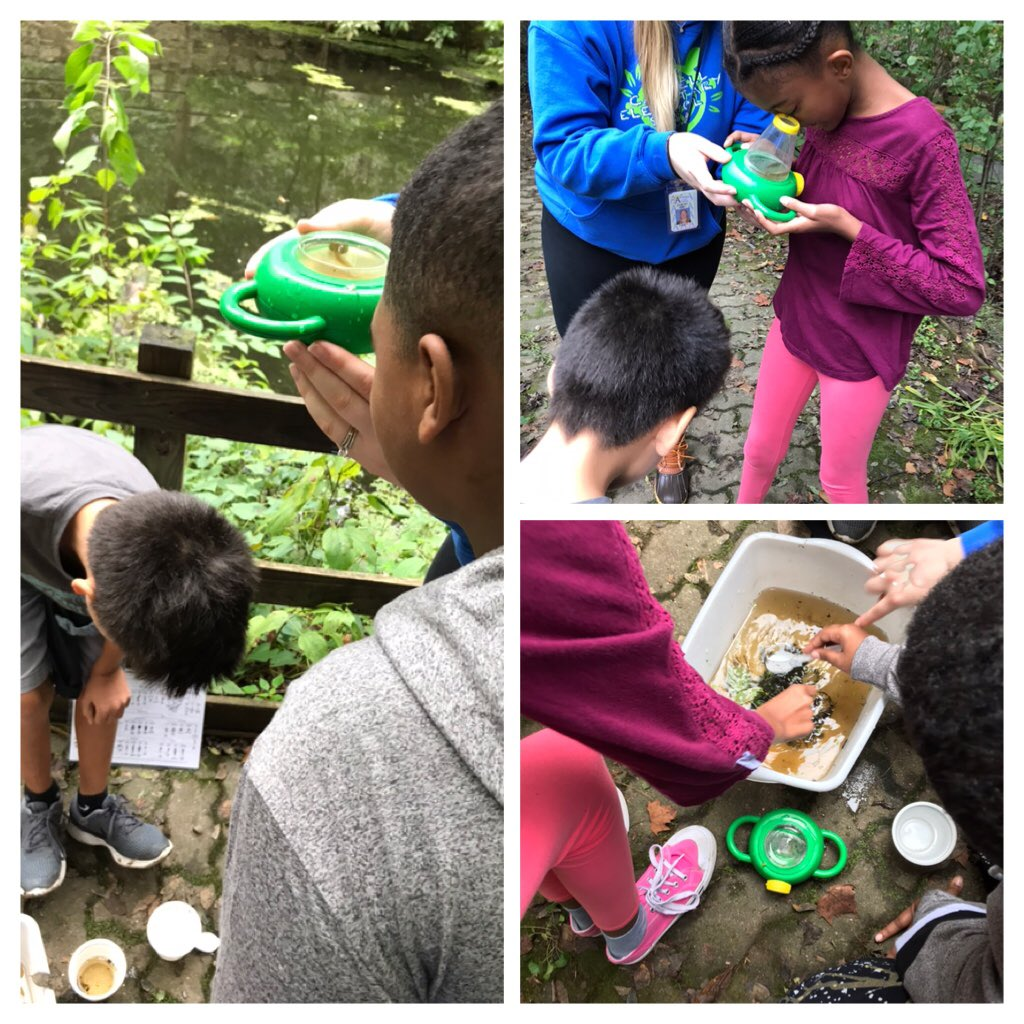 5th graders classifying pond life ⁦<a target='_blank' href='http://twitter.com/CampbellAPS'>@CampbellAPS</a>⁩ ⁦<a target='_blank' href='http://twitter.com/APSscience'>@APSscience</a>⁩ <a target='_blank' href='https://t.co/rLheyntCNX'>https://t.co/rLheyntCNX</a>
