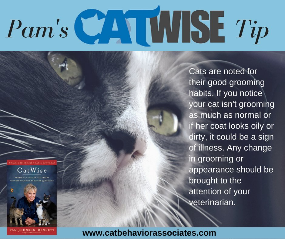 catwise americas favorite cat expert answers your cat behavior questions