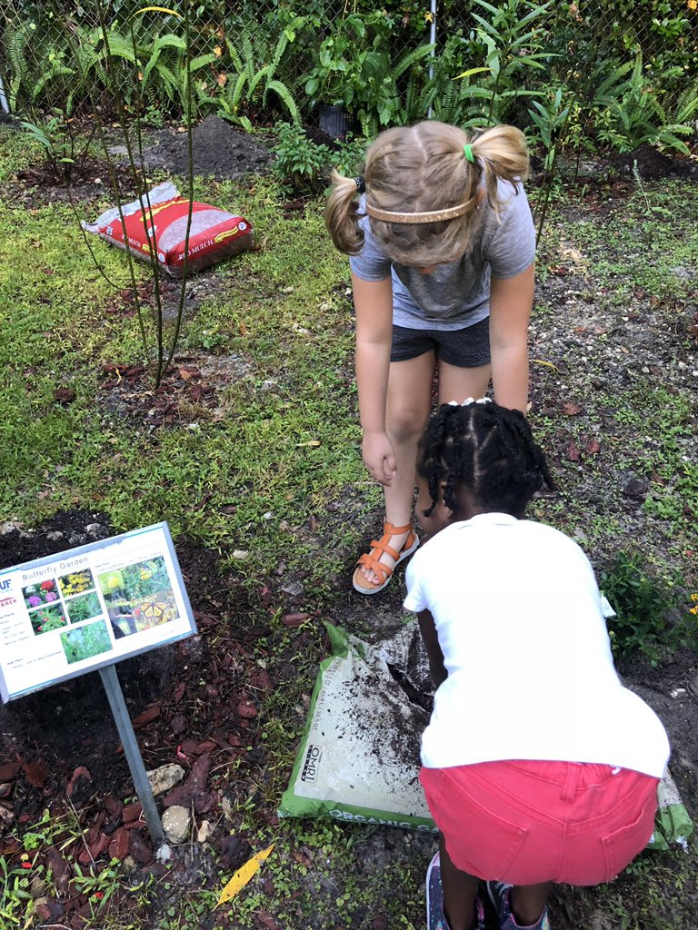 planting in our k1 butterfly garden with floridamuseum thank you andreimoth and teampictwittercomzhjhkr4ku0 - Uf Butterfly Garden