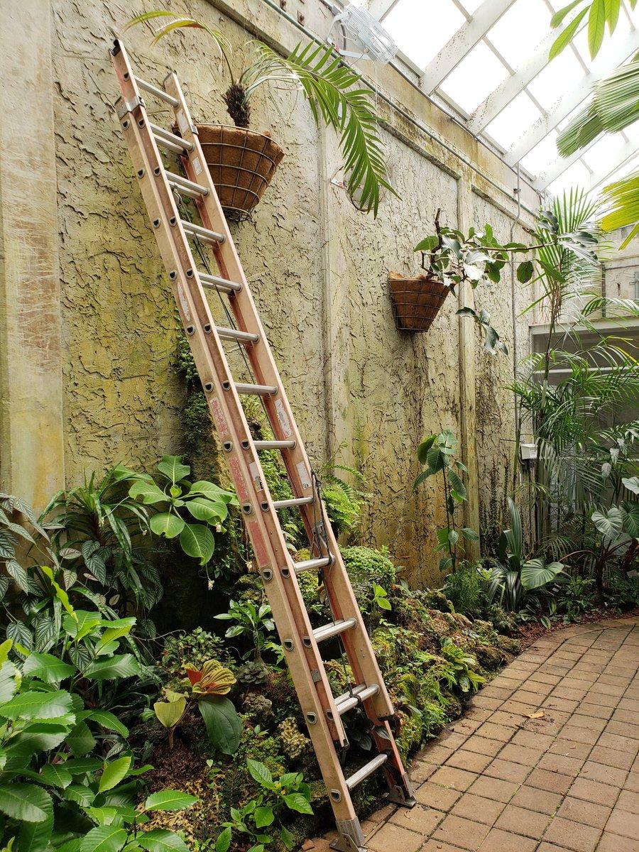 New Plants at Fairchild Tropical Botanic Garden (@NewPlantsFTBG ...