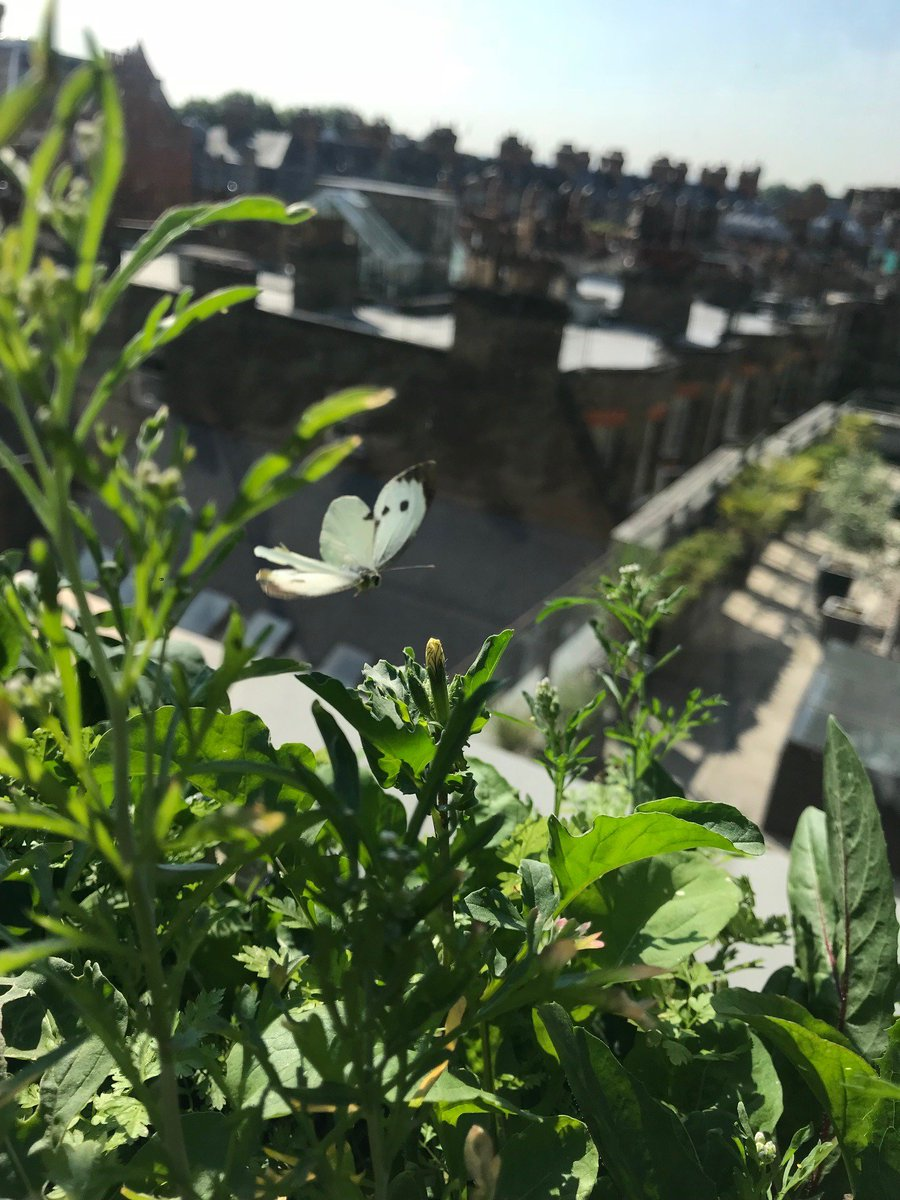 test Twitter Media - ANNOUNCED: our grant to @iucn will support a new global urban alliance promoting greener, healthier and more livable, cities. @ScotWildlife. Read more: https://t.co/dv6V5kfWXo Photo: our office terrace garden, London 🦋 https://t.co/edW2iImQFF