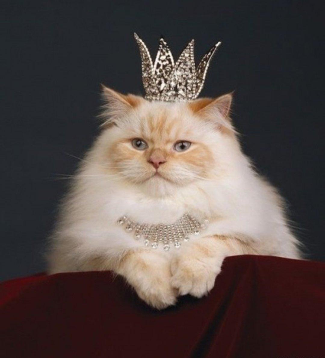 Прикольные картинки с короной, днем рождения картинки