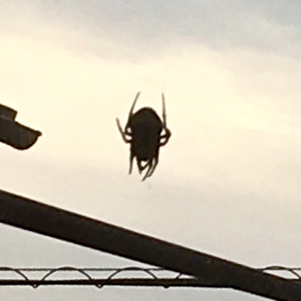 でかい 蜘蛛